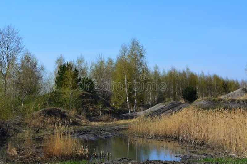 Vroeg de lentelandschap in Rusland Kleine heuvels met kruiden en bomen royalty-vrije stock afbeelding