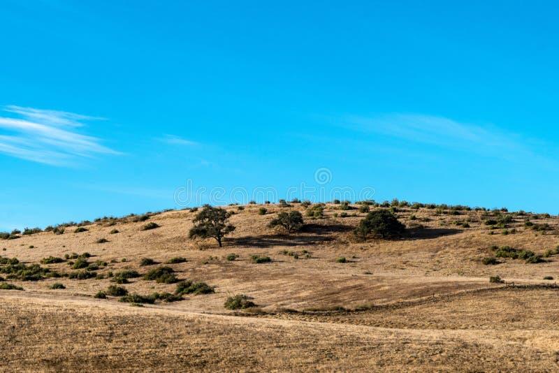Vroeg ochtendlicht op de uitlopers en de droge grassen in Monterey Californië royalty-vrije stock foto