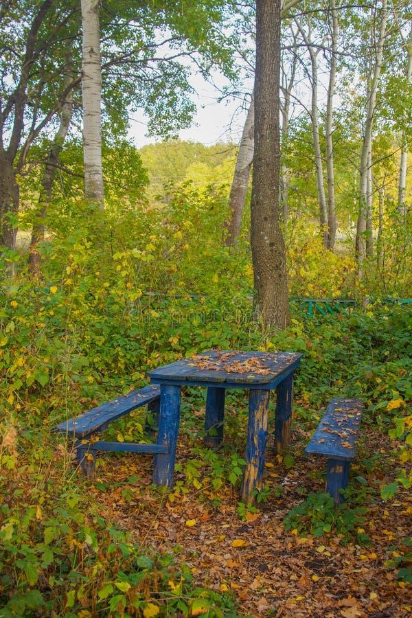 Vroege de bladeren groene geel van de herfst bosbomen royalty-vrije stock fotografie