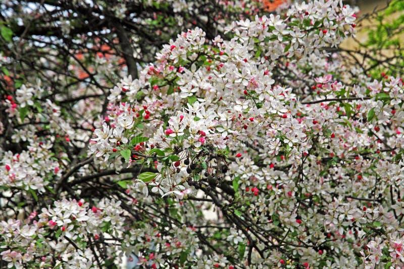 Vroege de lenteinstallaties in Botanische Tuin, Zagreb, Kroatië, 15 stock fotografie