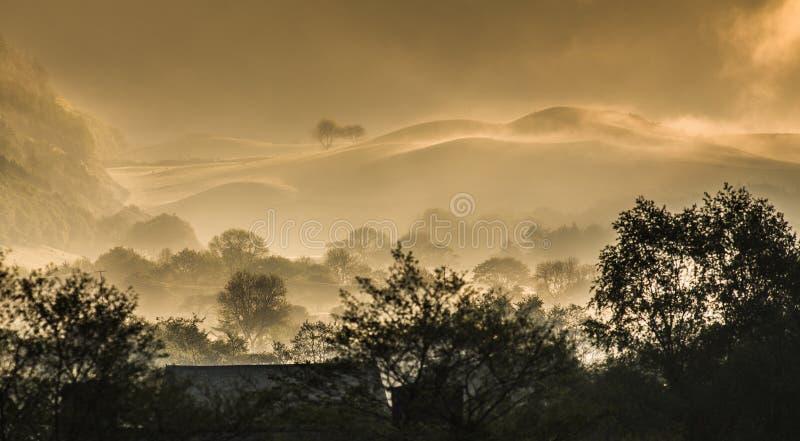 Vroege het landschapsmist van het ochtendplatteland stock afbeelding