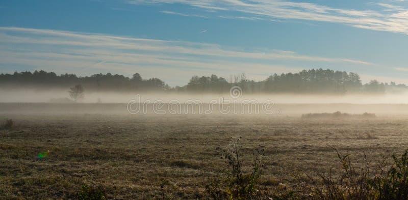 Vroege ochtend met mist over ijzige weide royalty-vrije stock fotografie