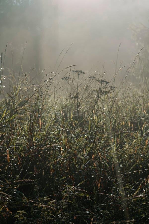 Vroege Ochtend Misty Meadow Mist op de achtergrond Zonsopgang stock foto's