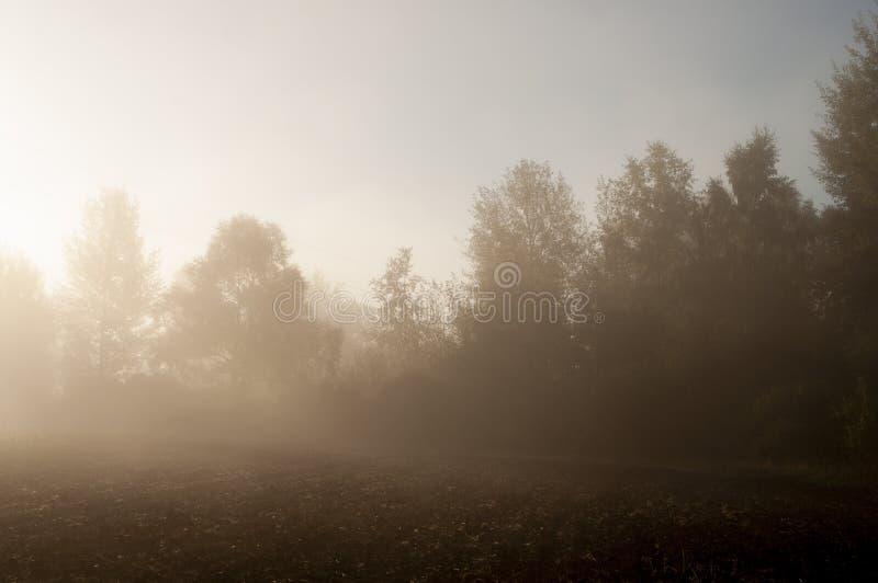 Vroege ochtend op het gebied met de herfstmist en dalingen van water in de lucht Tinten van bruin Niets zou kunnen ver weg zien B stock afbeelding