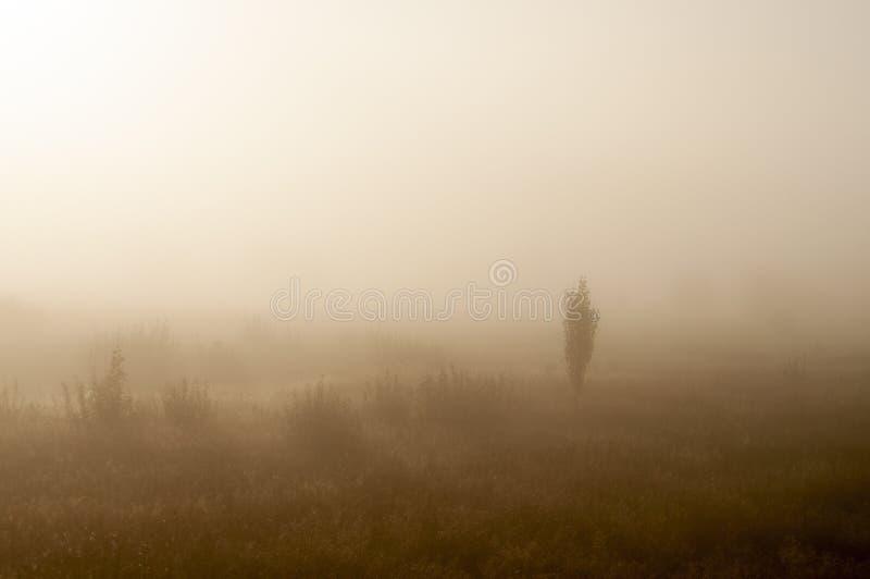 Vroege ochtend op het gebied met de herfstmist en dalingen van water in de lucht Tinten van bruin Niets zou kunnen ver weg zien B stock fotografie