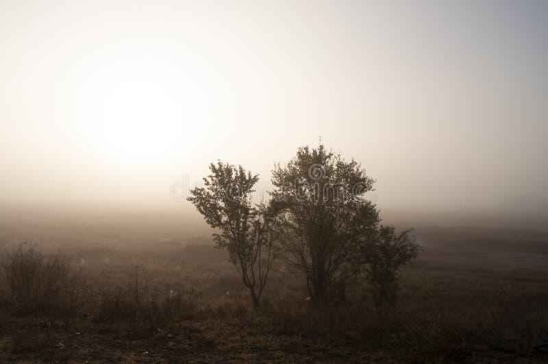 Vroege ochtend op het gebied met de herfstmist en dalingen van water in de lucht Tinten van bruin Niets zou kunnen ver weg zien B stock foto's