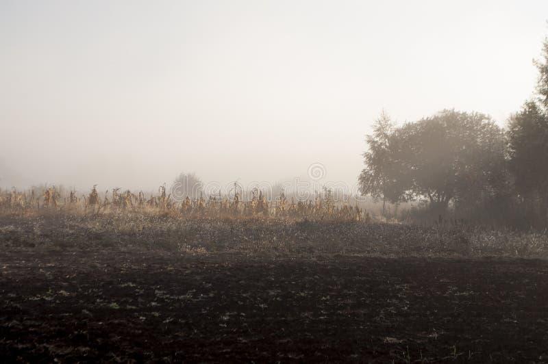 Vroege ochtend op het gebied met de herfstmist en dalingen van water in de lucht Tinten van bruin Niets zou kunnen ver weg zien B royalty-vrije stock afbeelding