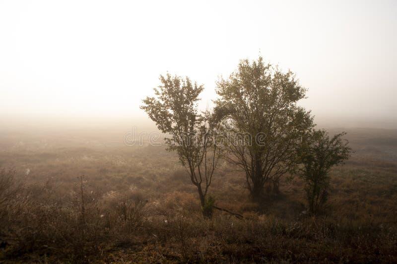 Vroege ochtend op het gebied met de herfstmist en dalingen van water in de lucht Tinten van bruin Niets zou kunnen ver weg zien B stock foto
