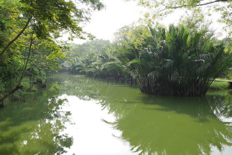 Vroege ochtend, Weelderige tropische palmenbezinning in de nog wateren stock afbeelding