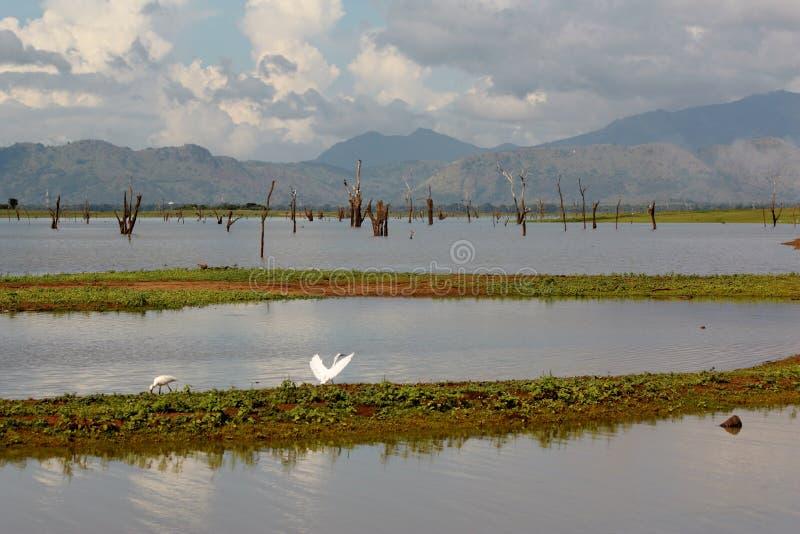 Vroege ochtendmening over Uda Walawe Lake, Sri Lanka royalty-vrije stock afbeeldingen