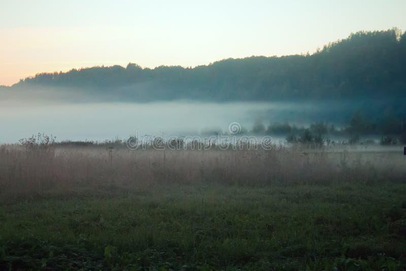 Vroege ochtendmist bij de rand van het bos en de weide stock afbeeldingen