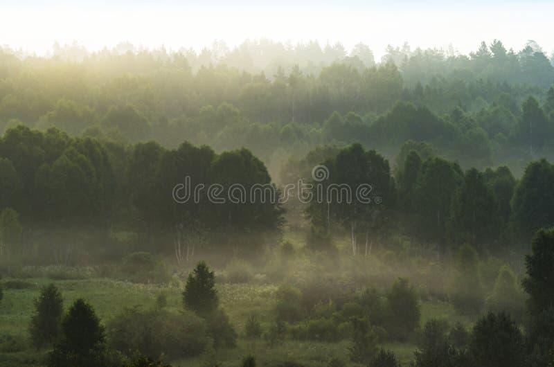 Vroege Ochtendmist over Bomen bij Altai-Bergen, Kazachstan Zongloed Fantasyland, Blauw Uurconcept stock afbeelding