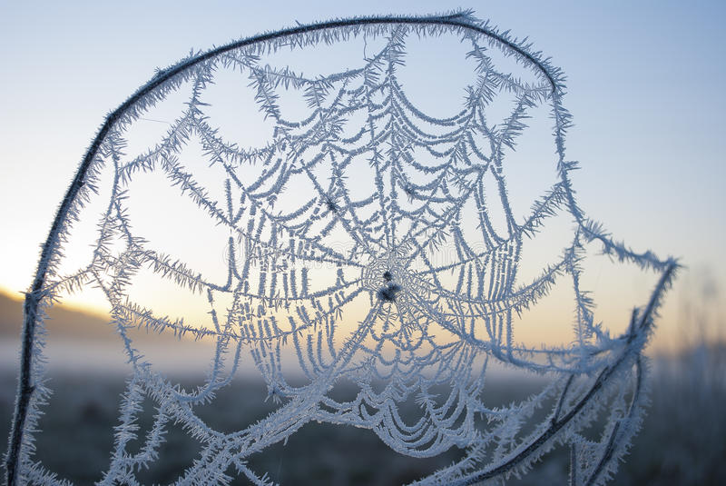 Vroege ochtendmist, vorst op het gebied, op groene installaties, de lenteachtergrond van en, spinnewebben in royalty-vrije stock afbeeldingen