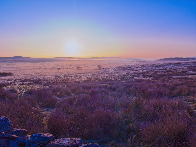 Vroege ochtendvorst Dartmoor royalty-vrije stock foto