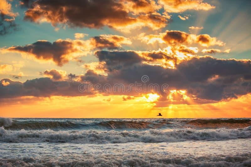 Vroege ochtendzonsopgang over het overzees en een vliegende vogel stock afbeeldingen