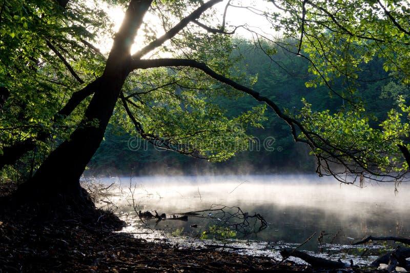Vroegere ochtend op de rivier stock fotografie