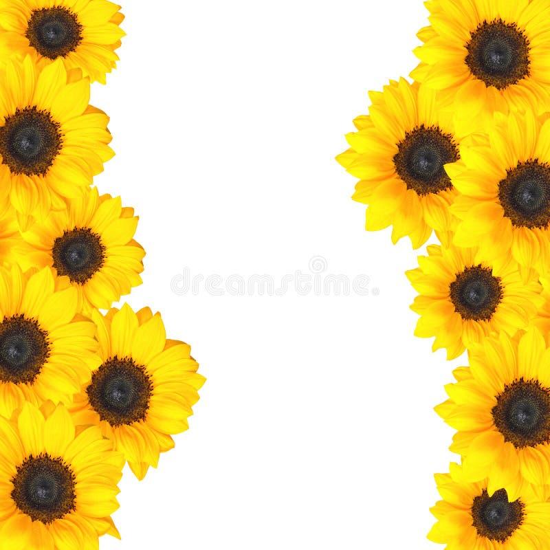 Vrolijk zonnebloemontwerp als achtergrond met exemplaarruimte royalty-vrije stock foto's