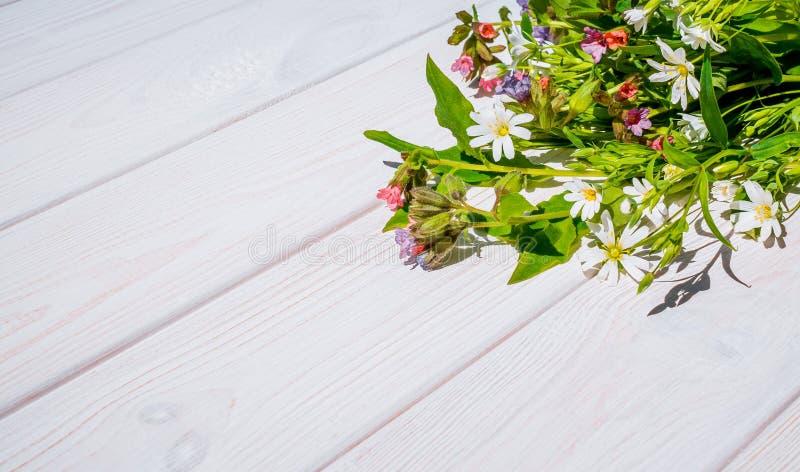 Vrolijke de lentewildflowers stock foto's