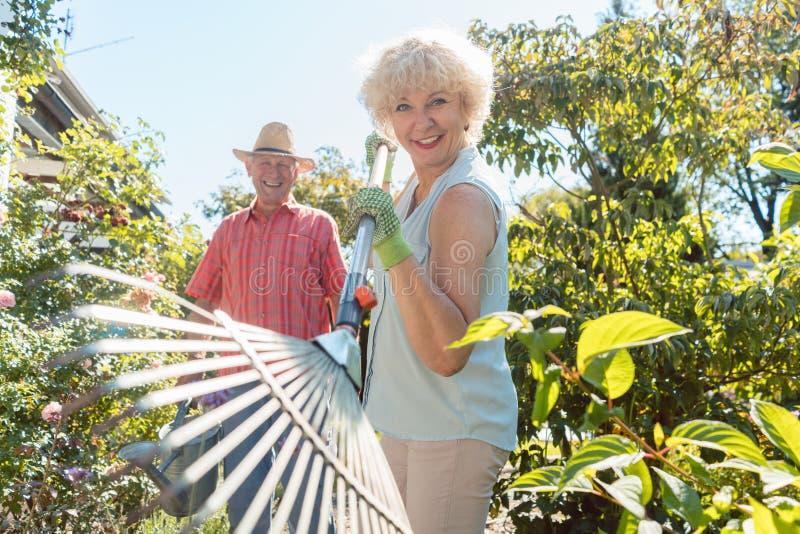 Vrolijke hogere vrouw die een bladhark houden tijdens het werk in de geep stock fotografie