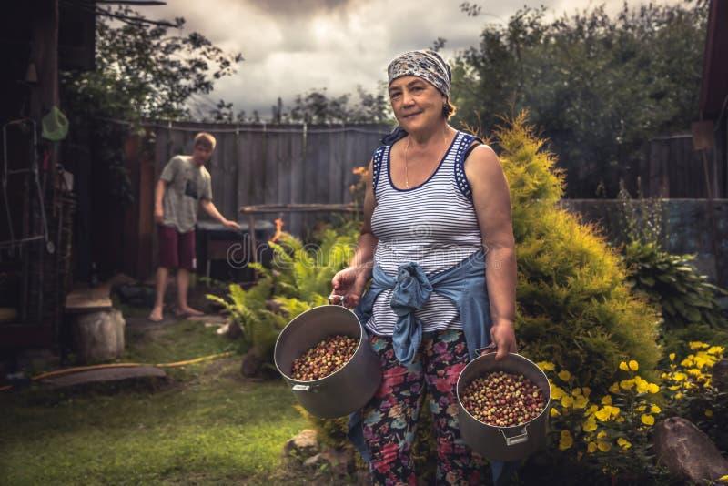 Vrolijke hogere vrouwenlandbouwer in tuin met gewas van rijpe aardbeien tijdens de zomer het oogsten seizoen in platteland stock afbeeldingen