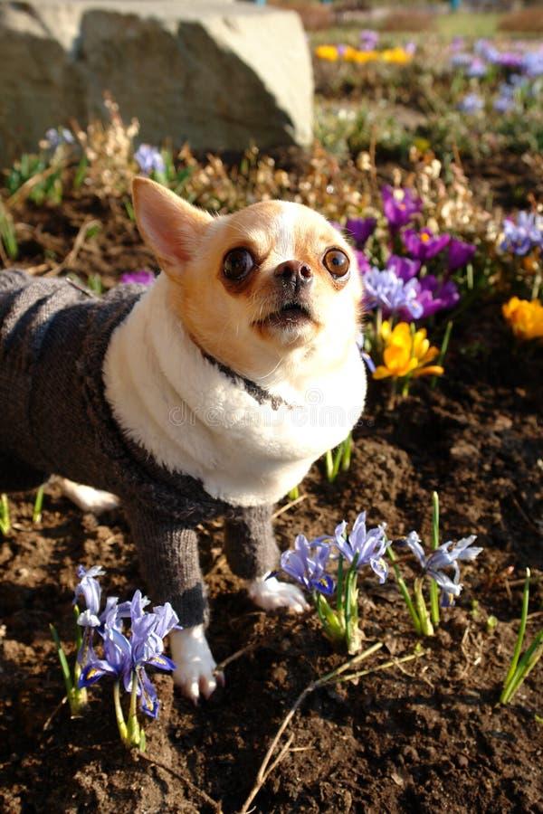 Vrolijke hond in de kleuren van de de lentedag royalty-vrije stock afbeelding