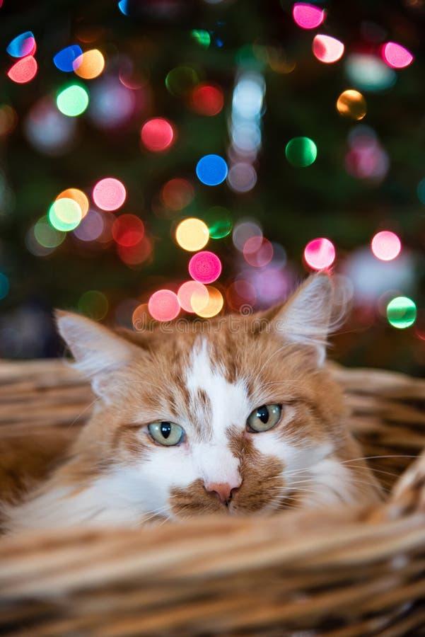 Vrolijke Kerstmis van spaander de kat royalty-vrije stock foto
