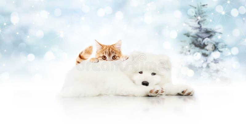 Vrolijke Kerstmisuithangbord of giftkaart voor dierenwinkel, witte hond a royalty-vrije stock foto's