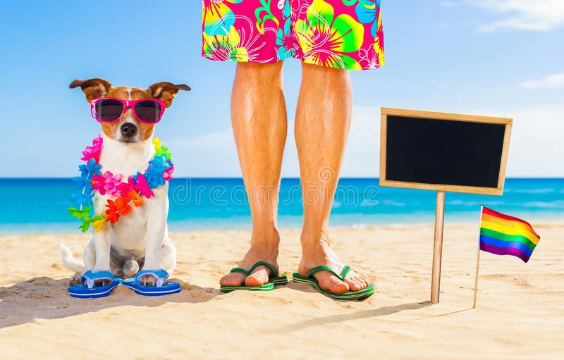 Vrolijke trotshond en eigenaar op de zomervakantie royalty-vrije stock fotografie