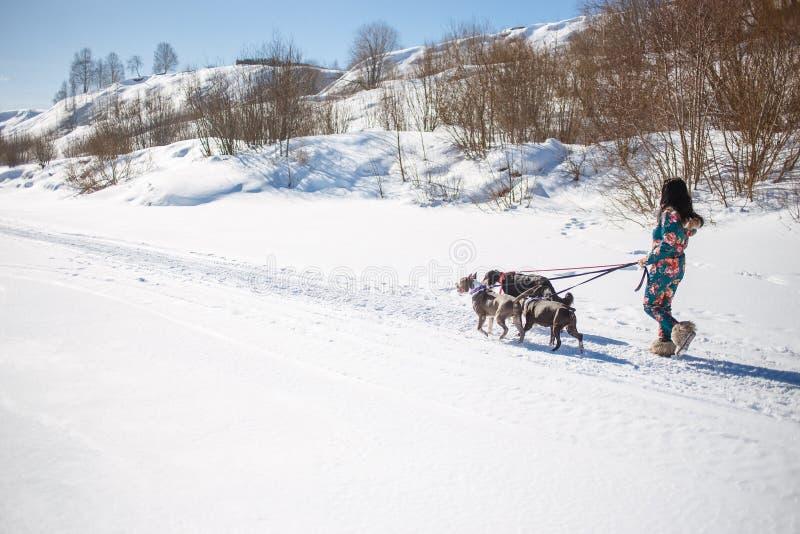 Vrolijke vrouweneigenaar die met haar honden in openlucht op sneeuw in zonnige de winterdag lopen royalty-vrije stock foto