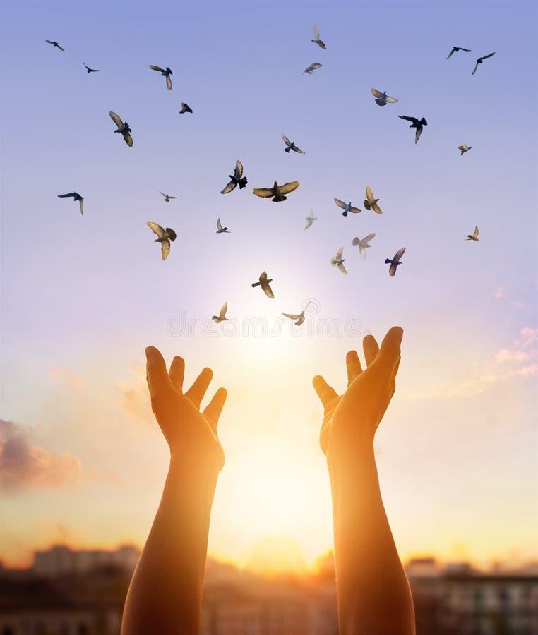 Vrouw bidden en vrije vogel die van aard op zonsondergangachtergrond genieten royalty-vrije stock afbeelding