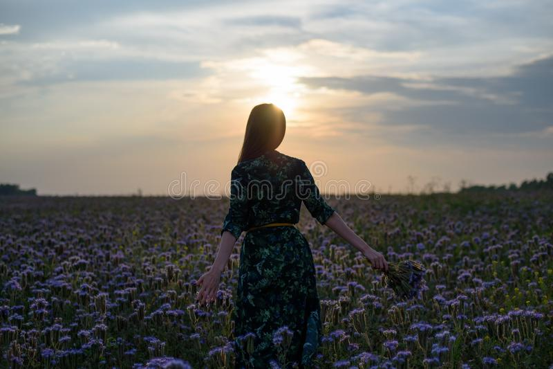 Vrouw bij zonsondergang de mening van de rug op het bloemgebied met een in hand boeket stock afbeeldingen