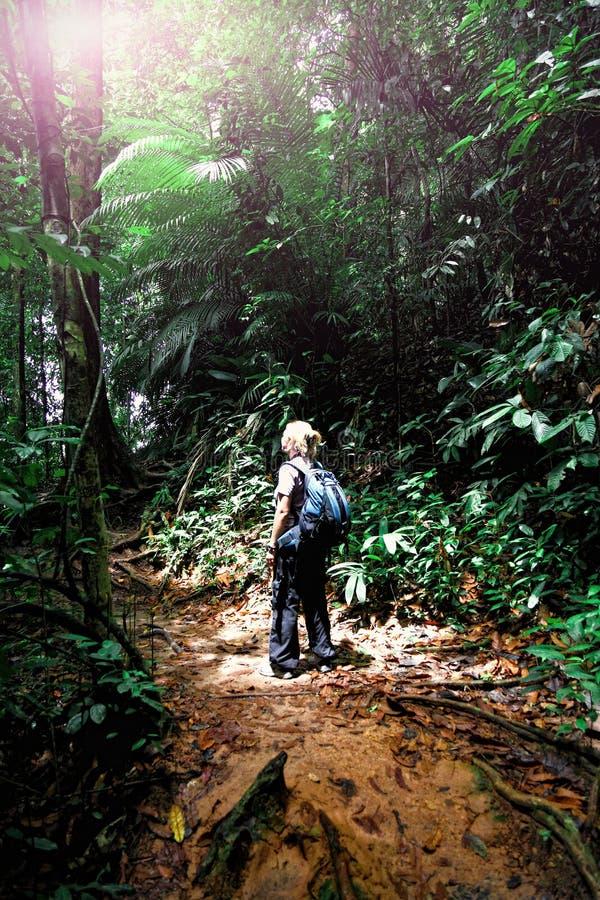 Vrouw in Borneo wildernis royalty-vrije stock fotografie