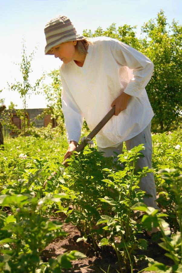 Vrouw in de tuin stock fotografie