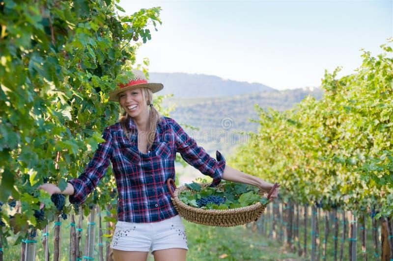 Vrouw in de wijngaard stock foto
