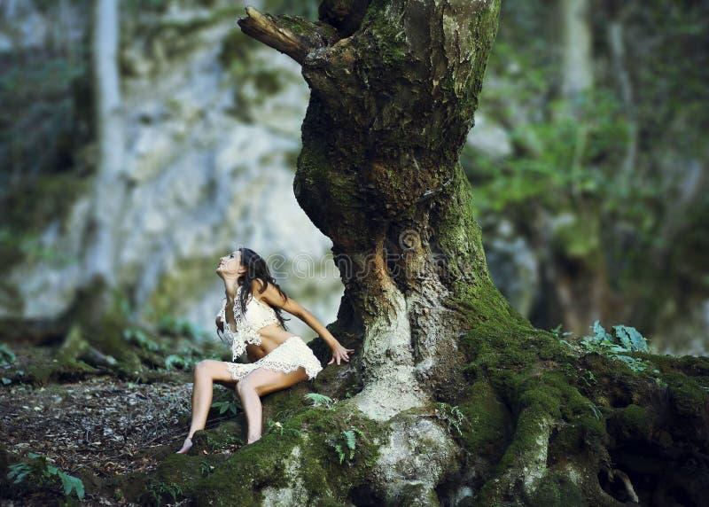 Vrouw dichtbij reuzeboomboomstam in hout royalty-vrije stock fotografie