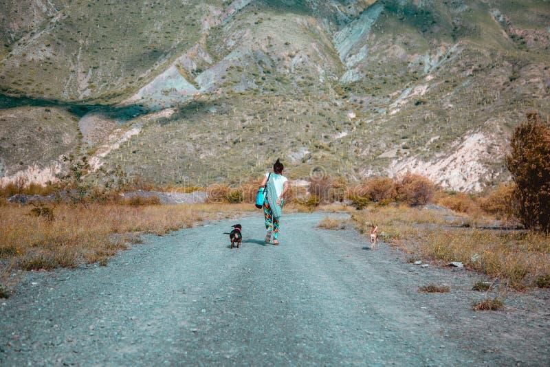 Vrouw die aan bergen met honden lopen stock foto