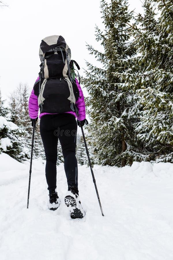 Vrouw die backpacker in de winterbos wandelen op sneeuw royalty-vrije stock fotografie