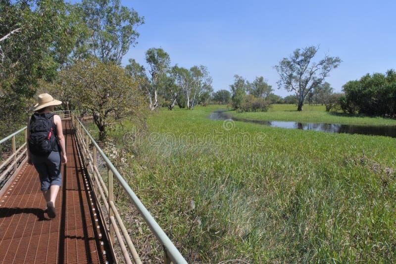 Vrouw die bij Nationaal het Park Noordelijk Grondgebied Australië wandelen van Kakadu stock foto's