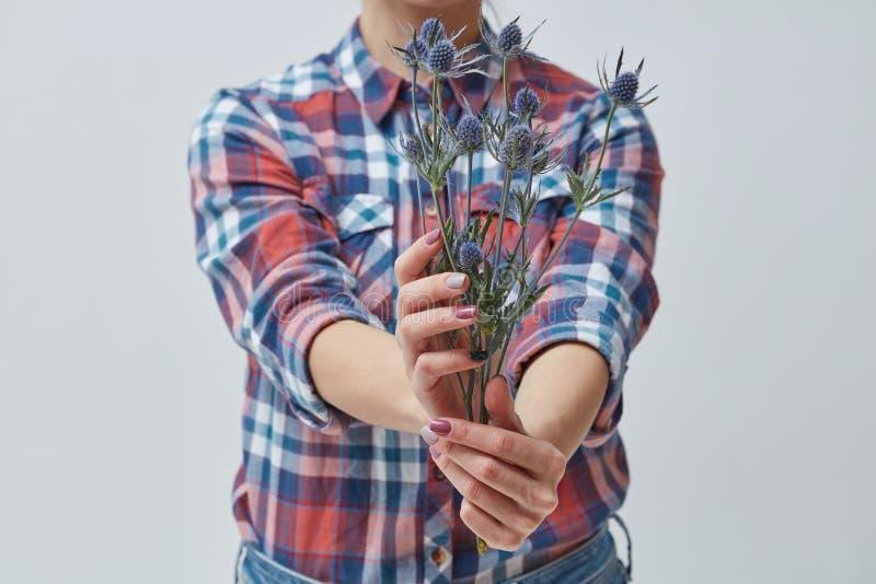 Vrouw die blauwe bloemeneryngium houden royalty-vrije stock afbeeldingen