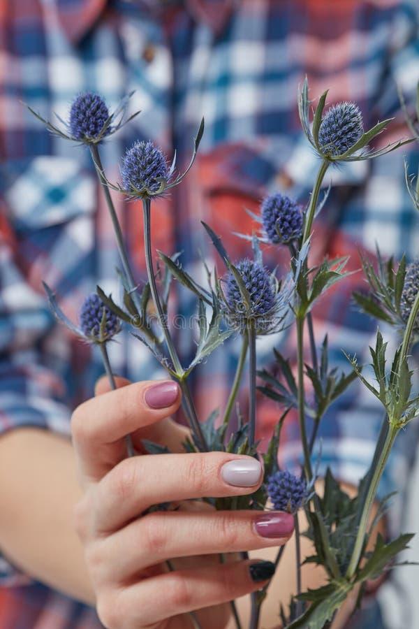 Vrouw die blauwe bloemeneryngium houden stock afbeelding