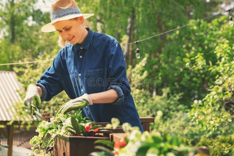 Vrouw die bloemen in dozen op terrastraliewerk planten stock afbeeldingen