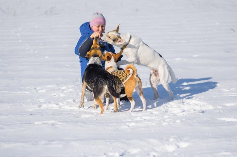 Vrouw die drie honden voeden terwijl spelen openlucht bij wintertijd stock foto's
