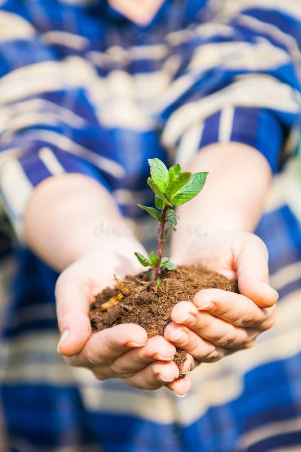 Vrouw die een groene jonge plant in haar handen houden Het concept van de ecologie stock afbeelding
