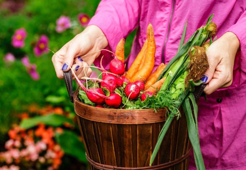 Vrouw die een mandhoogtepunt van groenten houden stock afbeeldingen