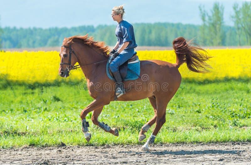 Vrouw die een paard berijden royalty-vrije stock afbeelding
