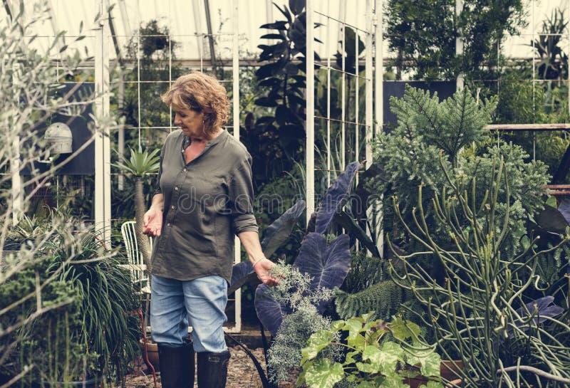 Vrouw die in een serre werken royalty-vrije stock fotografie