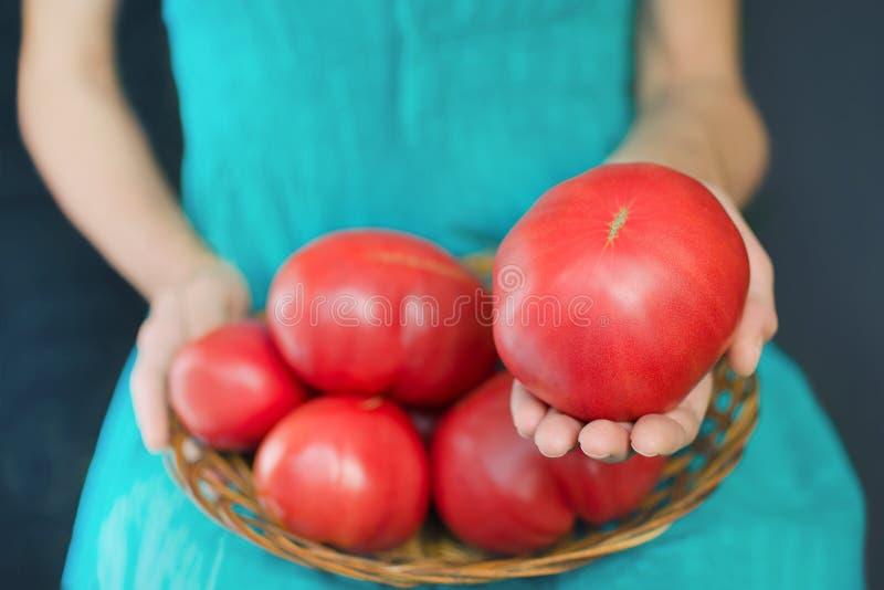 Vrouw die een zeer grote tomaat, op haar knieën houden een mand met tomaten stock afbeeldingen