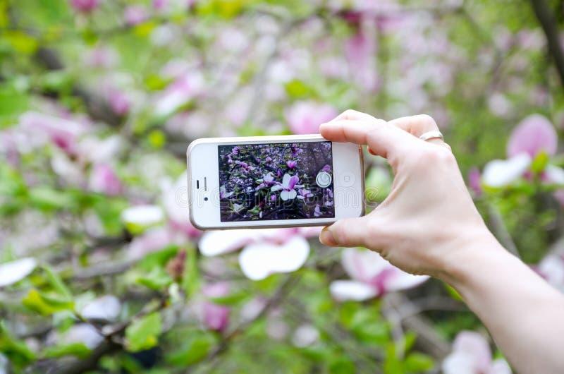 Vrouw die foto met mobiele celtelefoon neemt stock fotografie