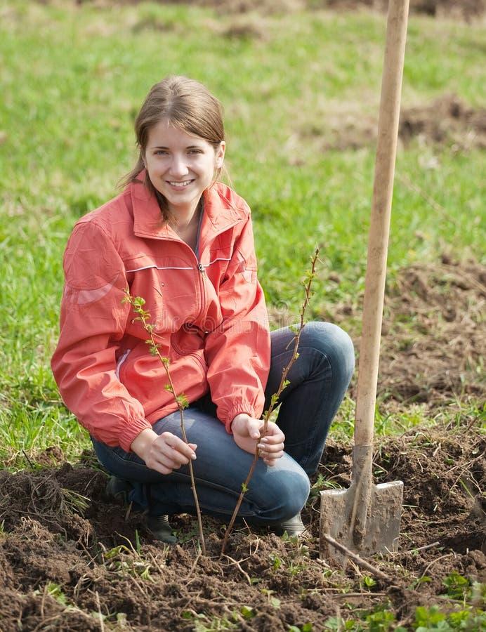 Vrouw die frambozenspruiten terugstelt royalty-vrije stock afbeelding