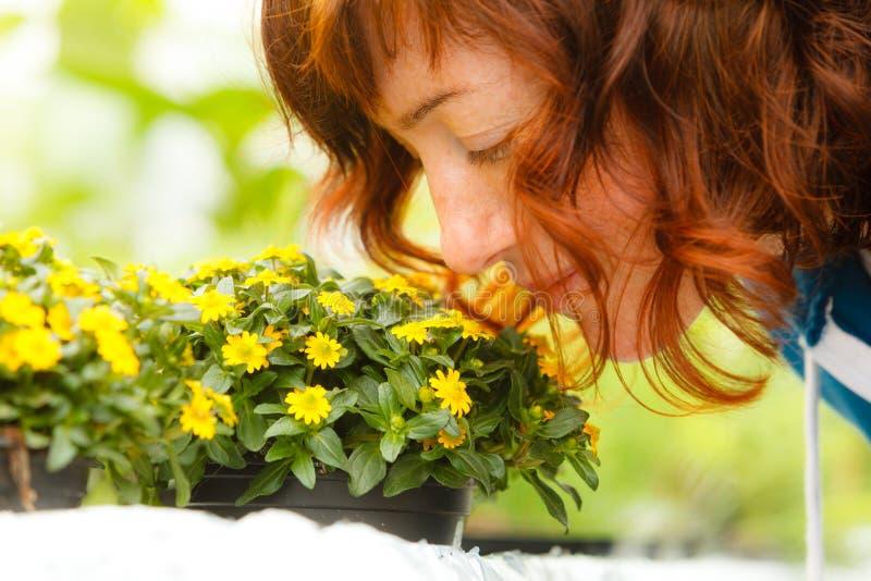 Vrouw die gele bloemen, sanwitalia ruiken royalty-vrije stock foto